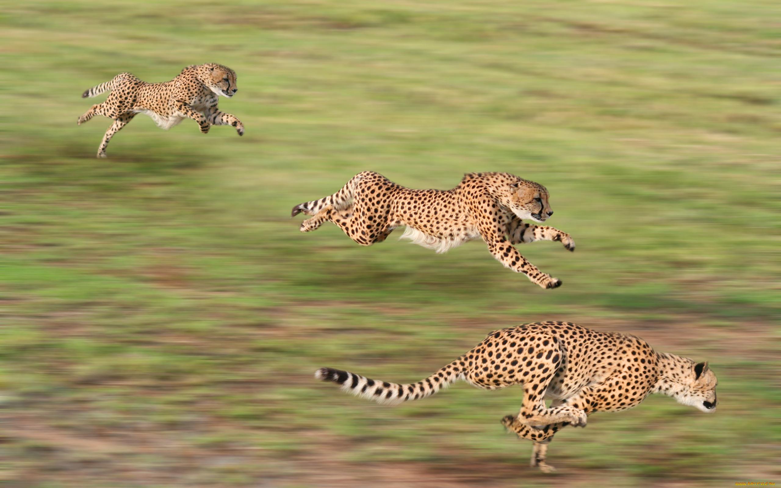 это двигающиеся картинки животных потому